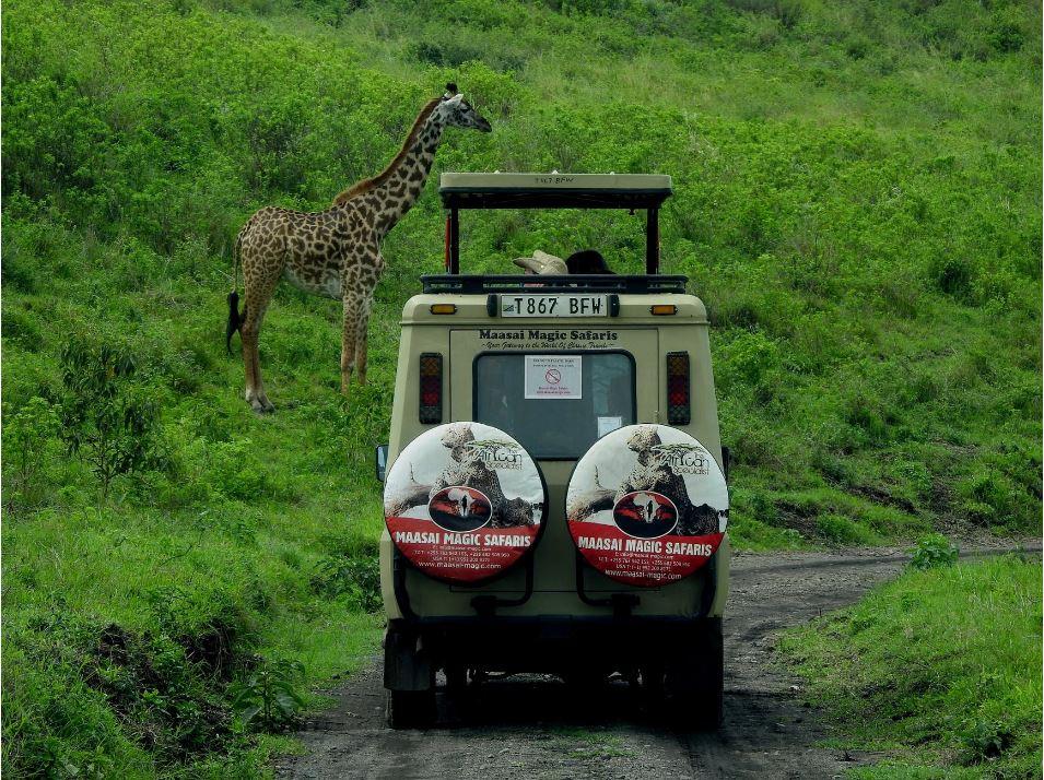 Opter pour un safari pas cher et authentique en Tanzanie