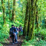 Pour un avenir meilleur misez sur le tourisme vert
