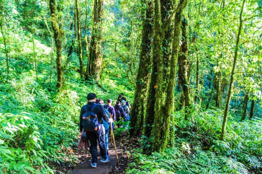 Pour un avenir meilleur, misez sur le tourisme vert