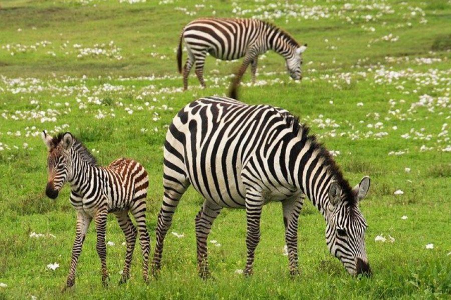 Différentes manières de faire du safari tout en protégeant l'environnement en Tanzanie